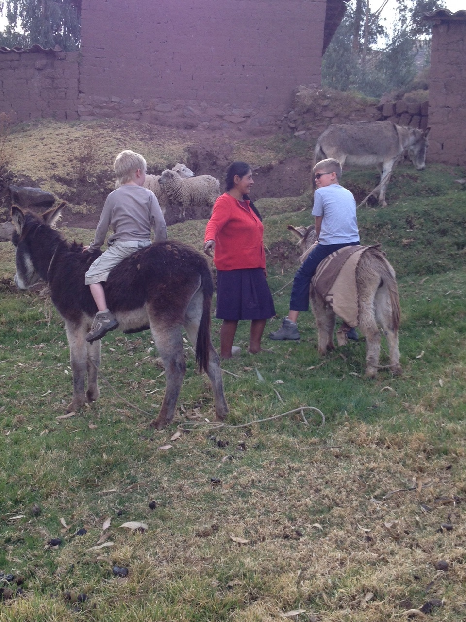 Attempting to ride the donkeys