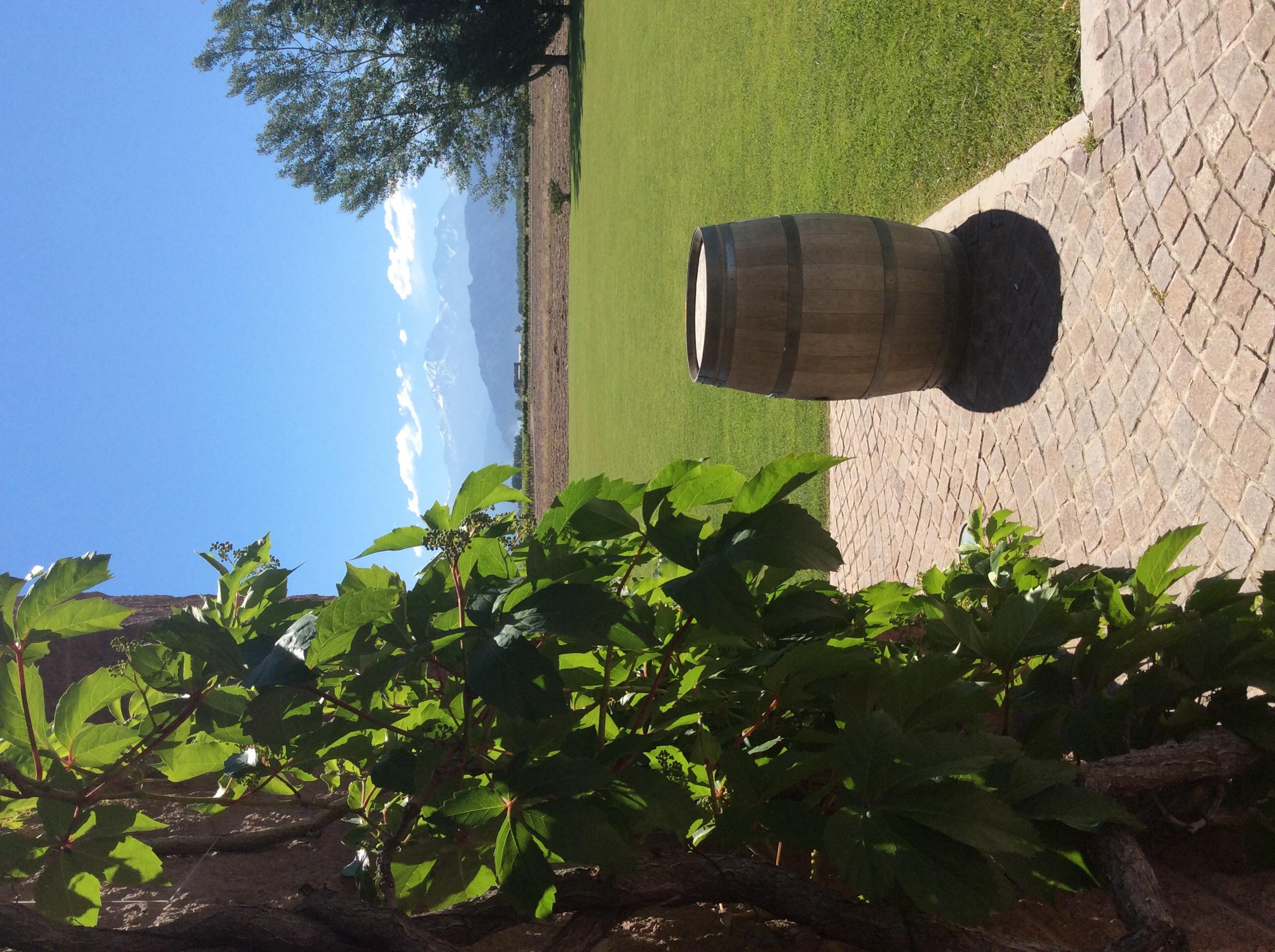 Vineyard in Mendoza