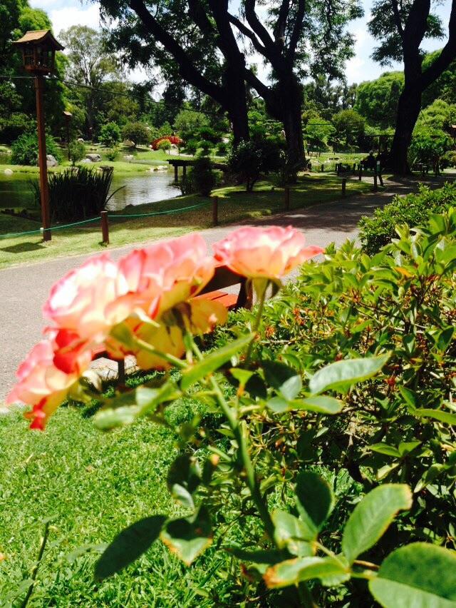 Japanese Garden in Palermo, Buenos Aires