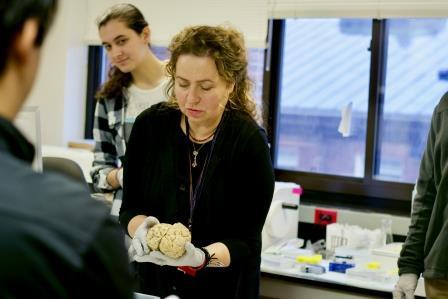 Dr. Sabina Berretta, Harvard Brain Tissue Resource Center at McLean Hospital, handles the brains.