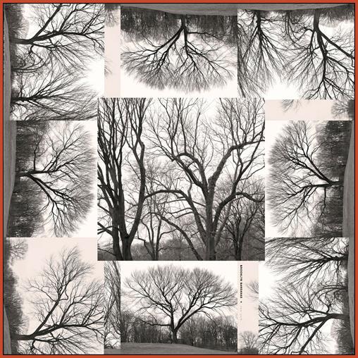 Tree.collage.final.web.orange.jpg