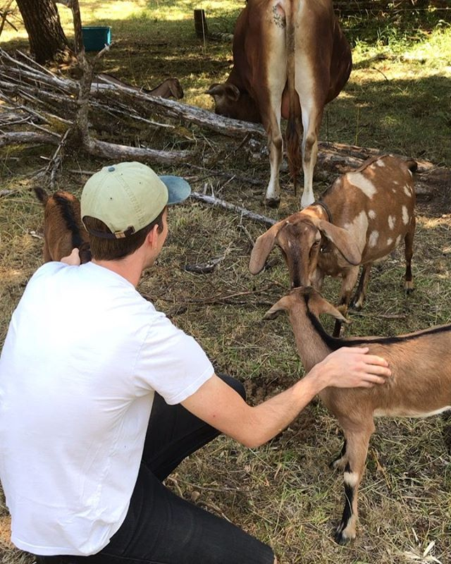 Happy (early🐣) bday to @clarkjacksonart ~ some dreamy cabin farm pics petting all the cuties ~ actual bday is on Wednesday so b nice 2 him 🐄🐐🐓🌲❣️