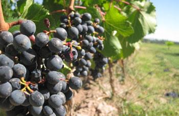 winepic.jpg
