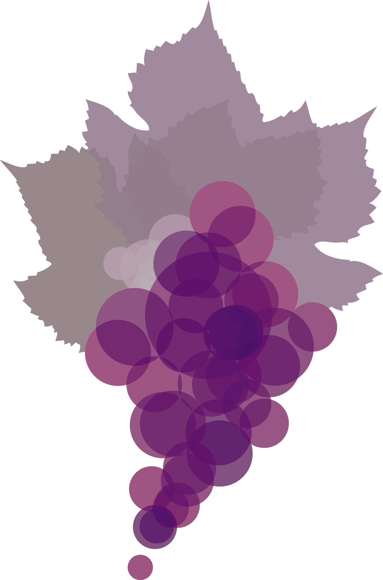 ShirazCab_Grapes.png
