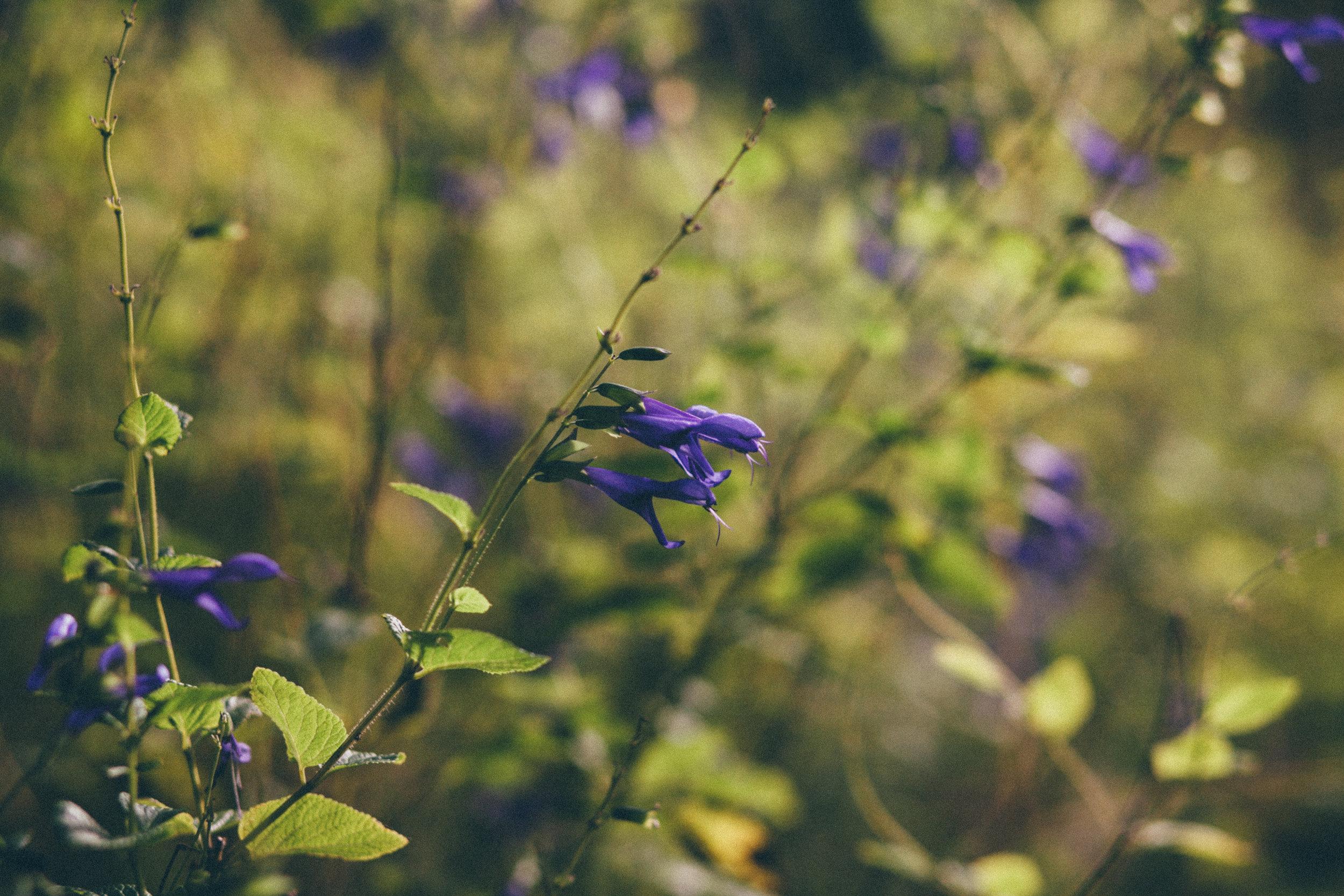 florals-164.jpg