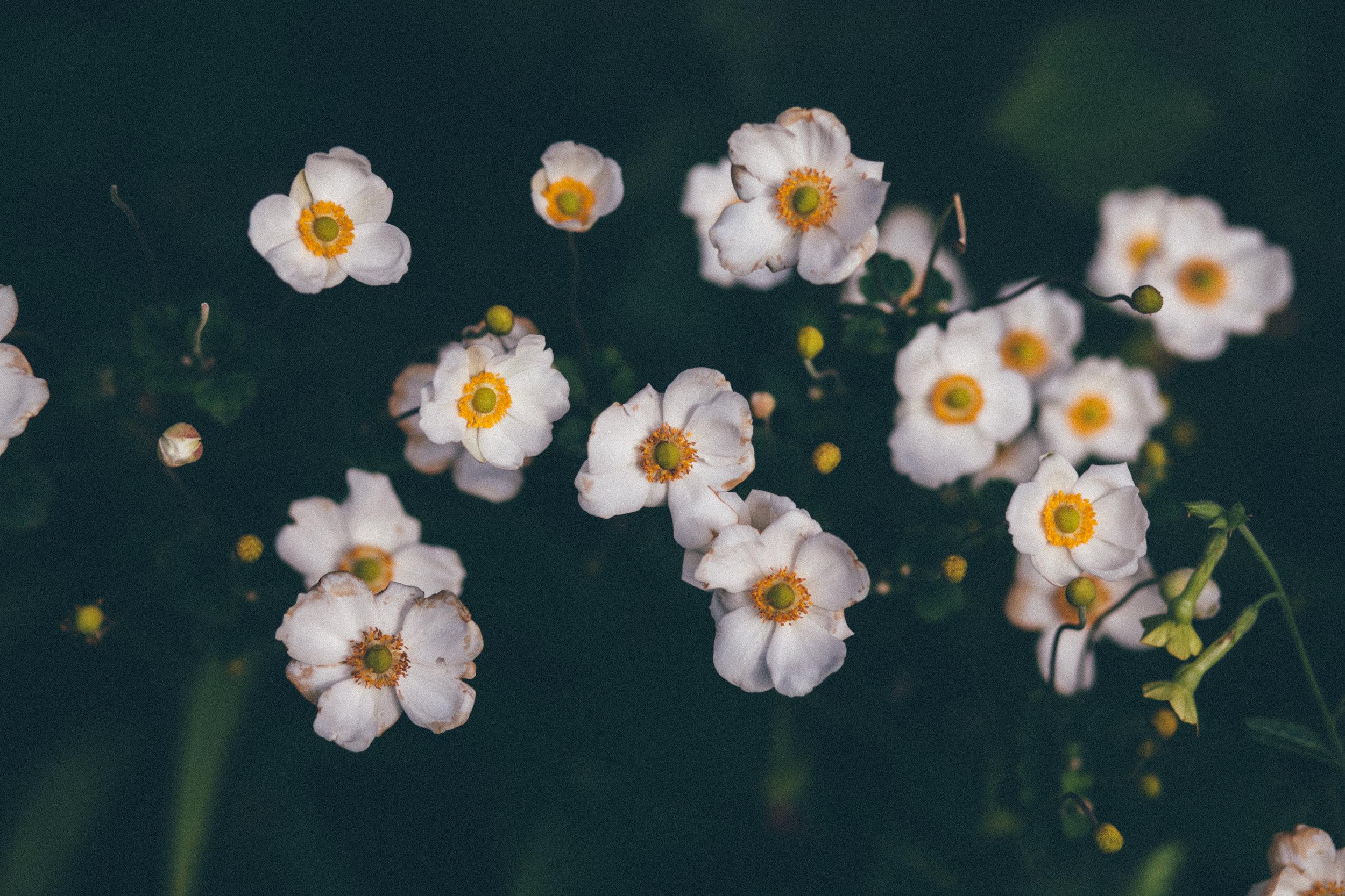 florals-166.jpg