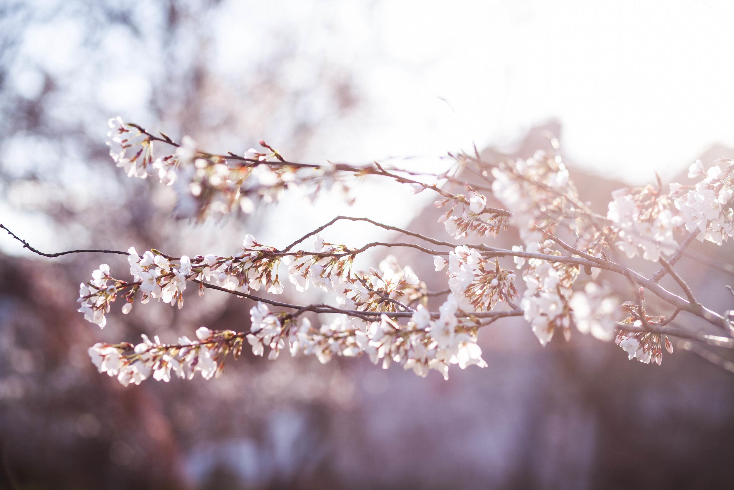 theGirls_spring_2014-33.jpg