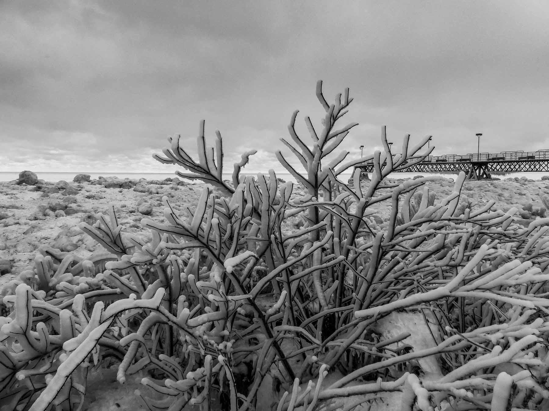 Lake Bush_Ice (1 of 1).jpg