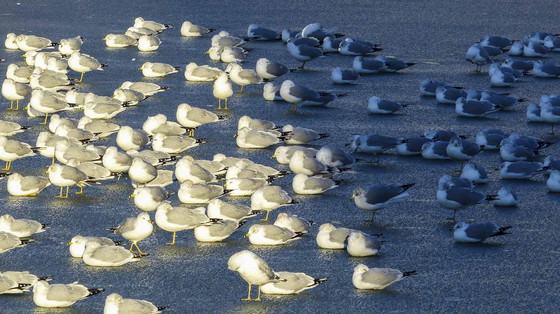 Seagulls_CU (1 of 1).jpg