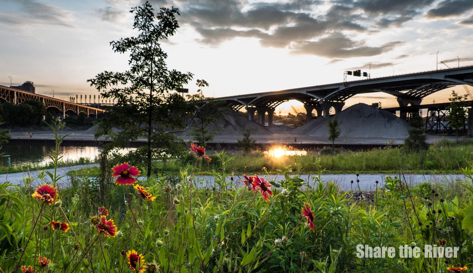 Innerbelt_Scranton Flats_wildflower_1.jpg