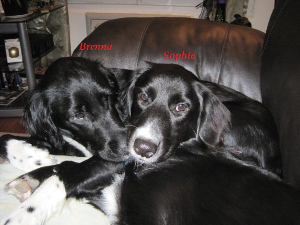 Brenna & Sophie.jpg