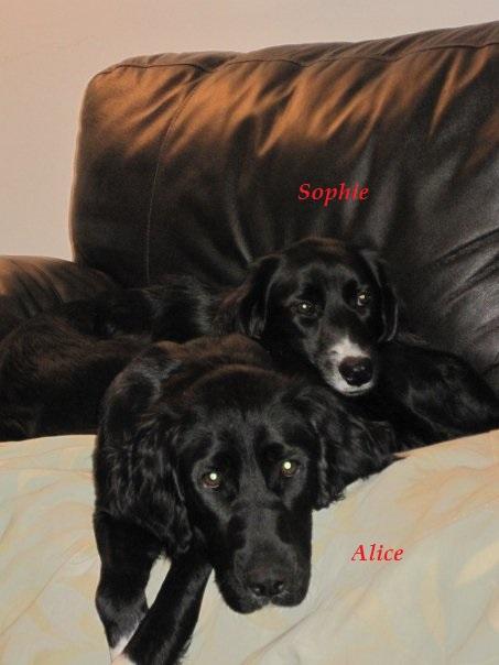 Sophie & foster Alice.jpg