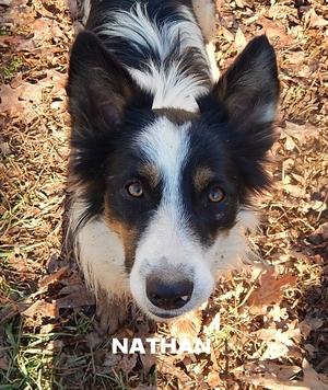 Nathann