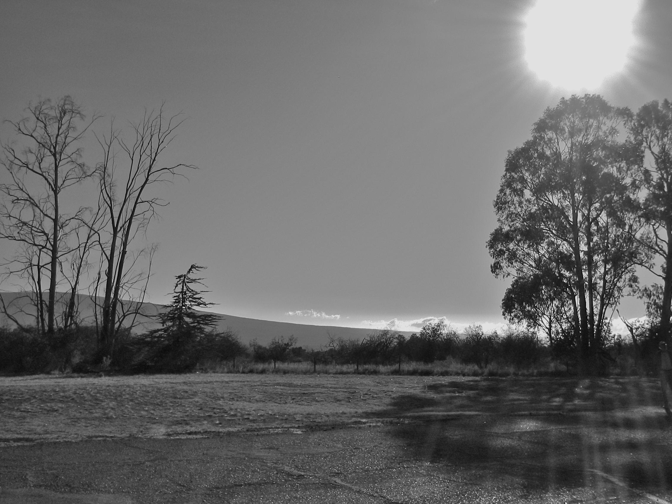 tree sun bw.JPG