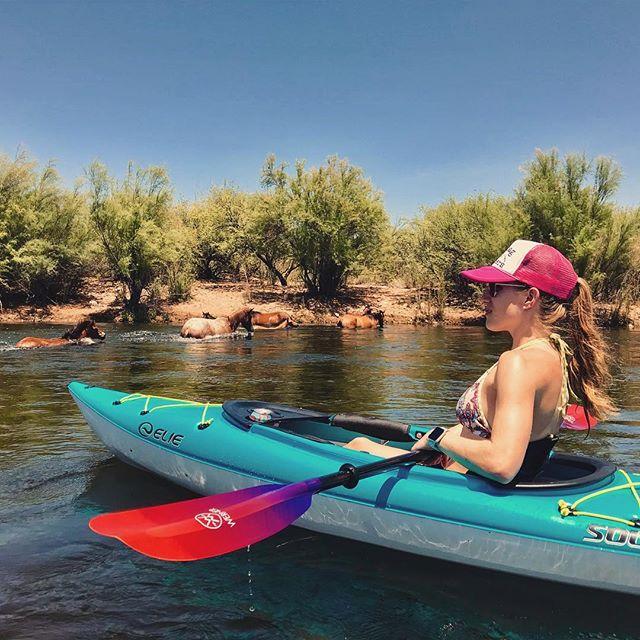 Horse crossing. #saltriver #wildhorses #saltriverhorses #kayak #kayaking #kayakingadventures #eliekayaks #wernerpaddles #wernerpaddle #saltriverkayaking #getoutandkayak #optoutside #riveradventures #azfamily #rei #summeradventures #azkayaking #beattheheataz #cannedwineisclassy #oceansawaywine #rei #azadventurebabes