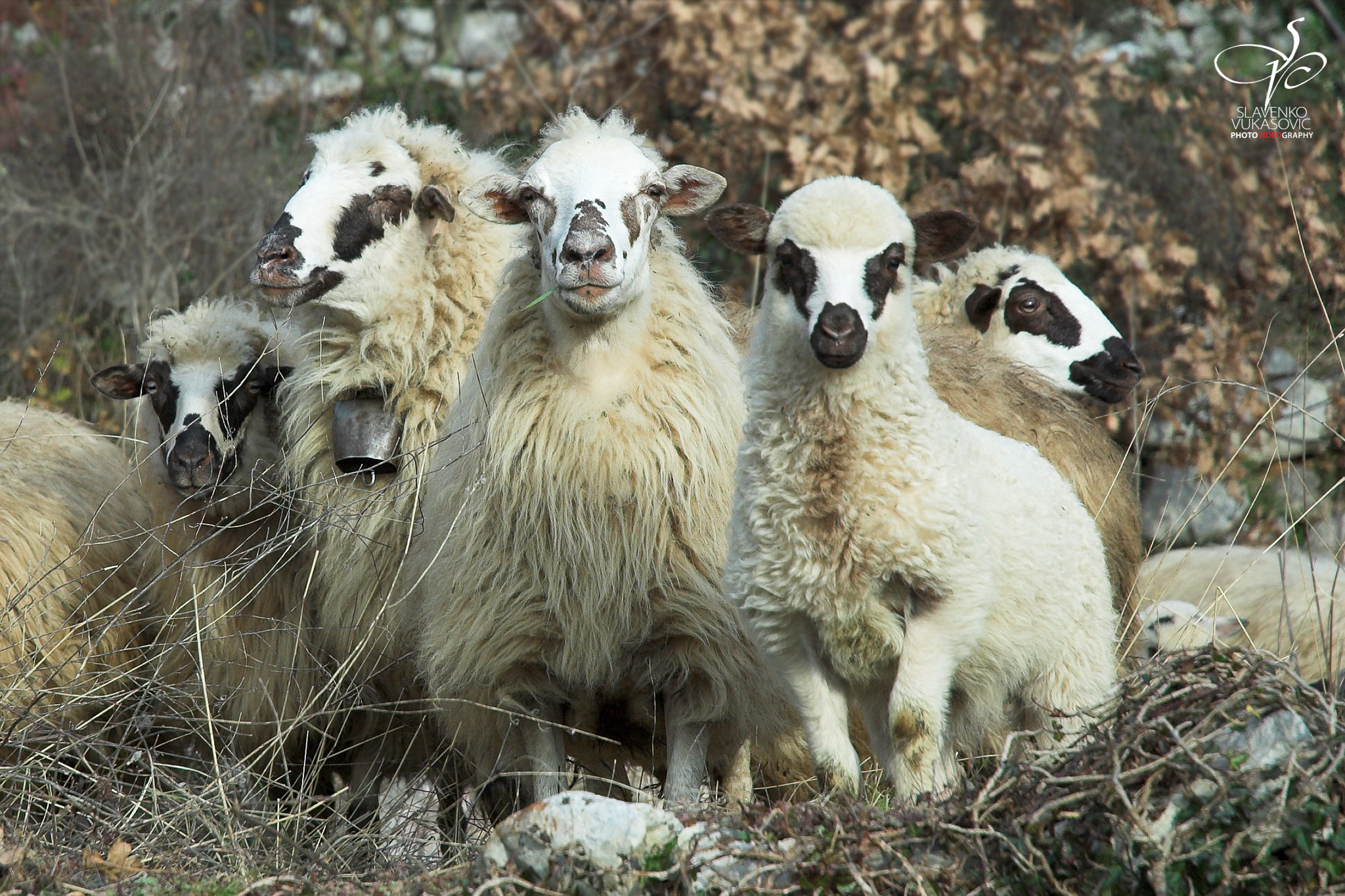 Blee family portrait.jpg