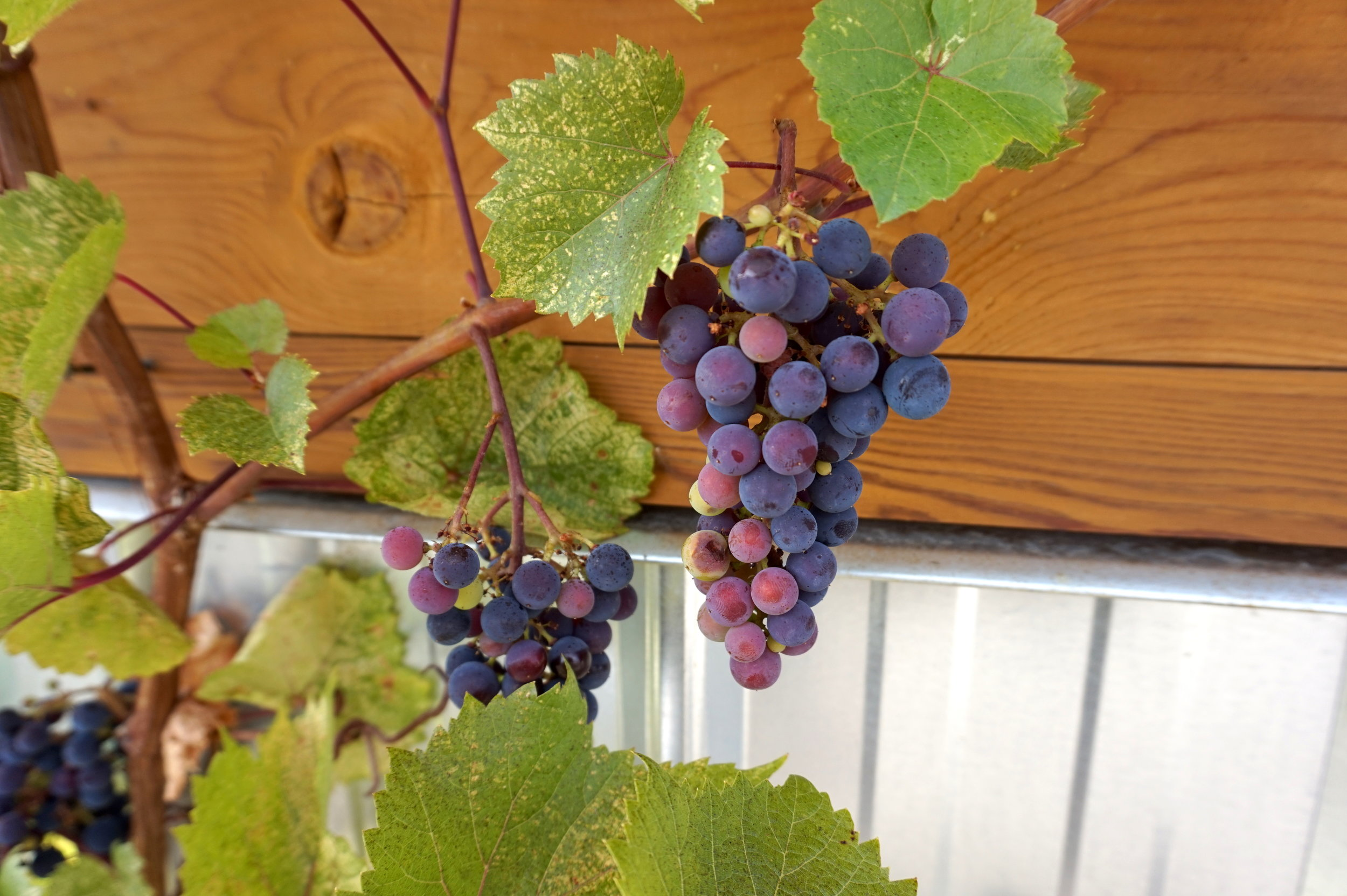 british columbia winery