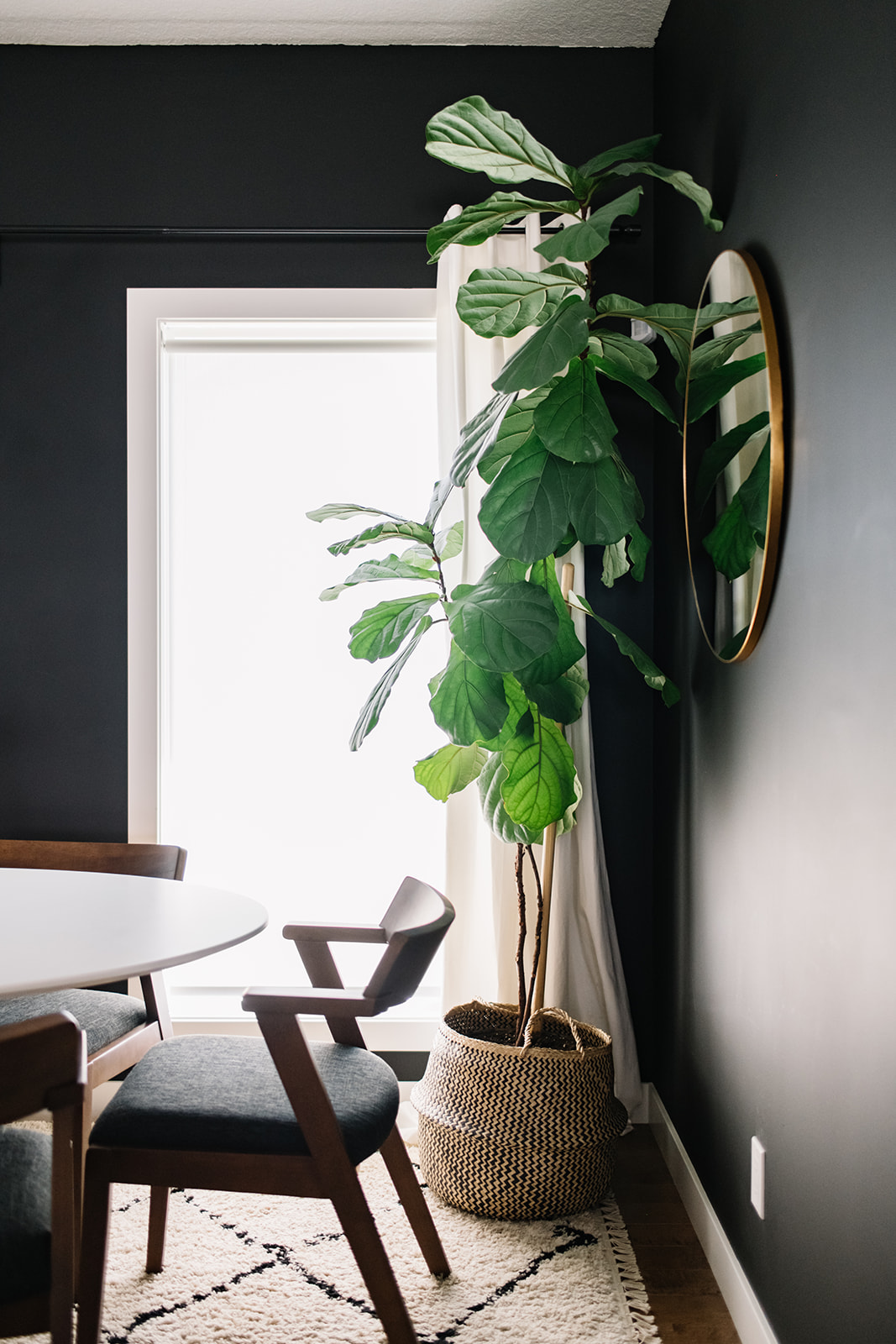 fig tree in dining room