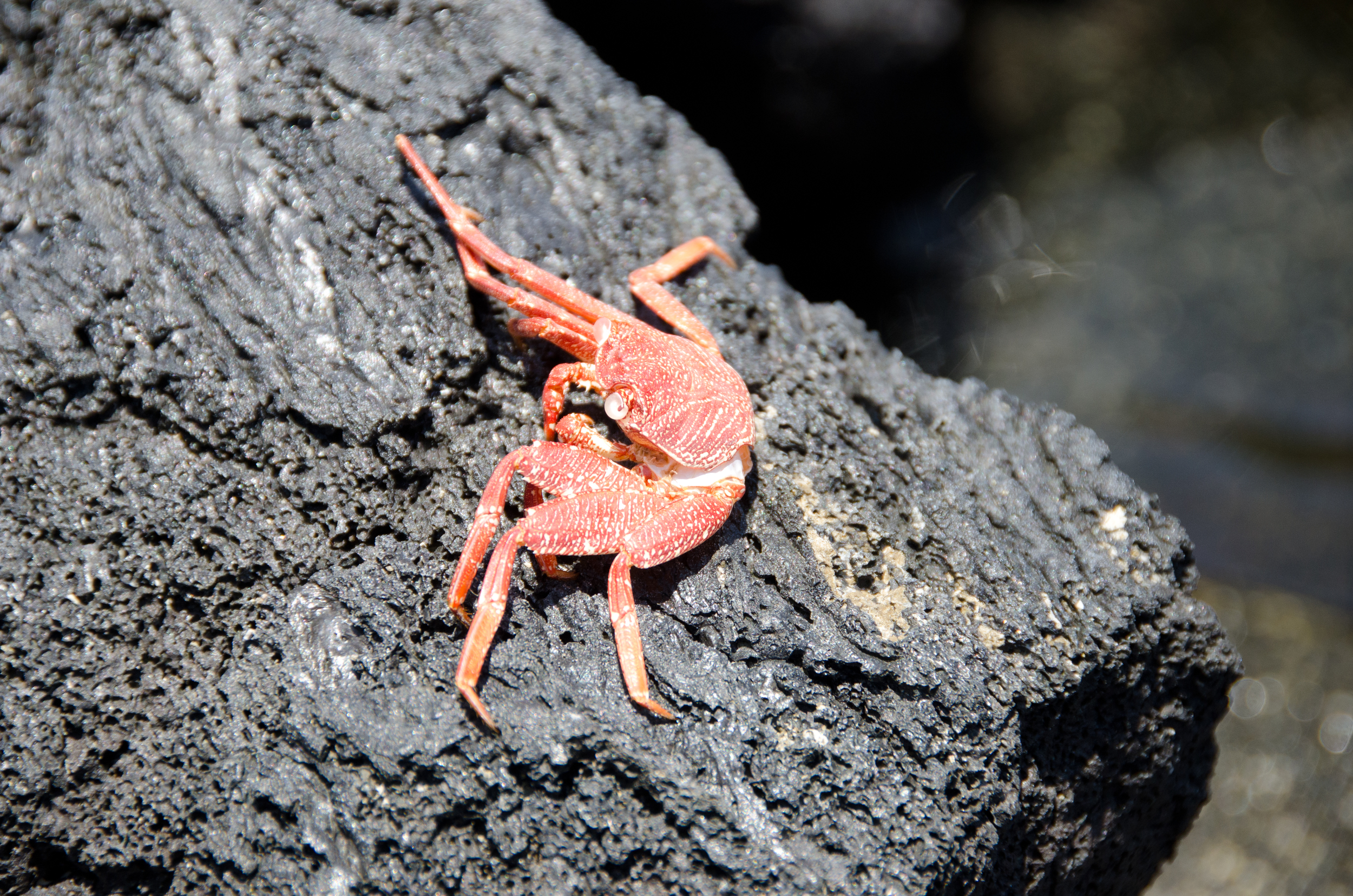 Feeling a little crabby?  photo:  Michael Bruner