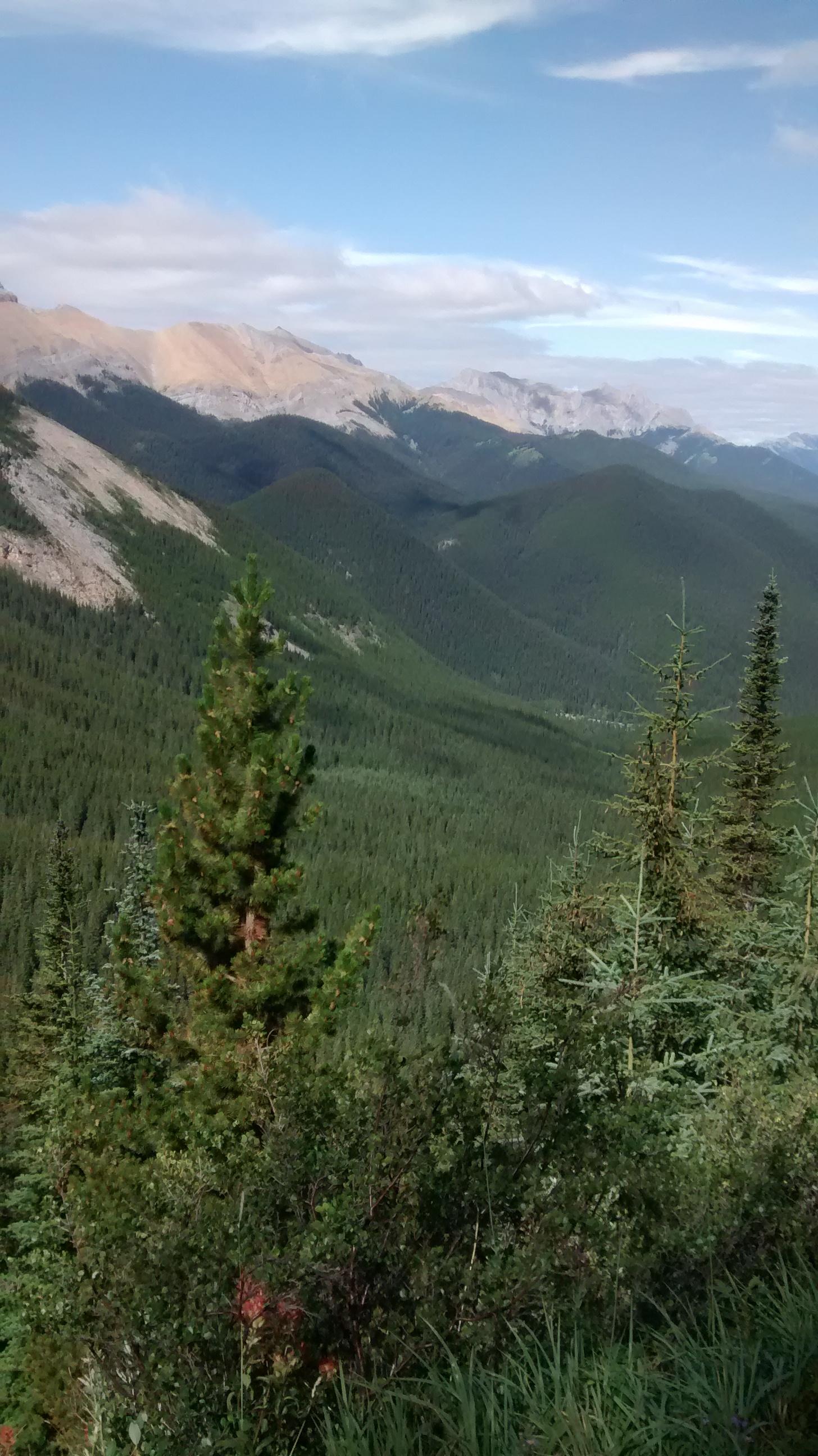 View from Sulphur Skyline, Jasper National Park