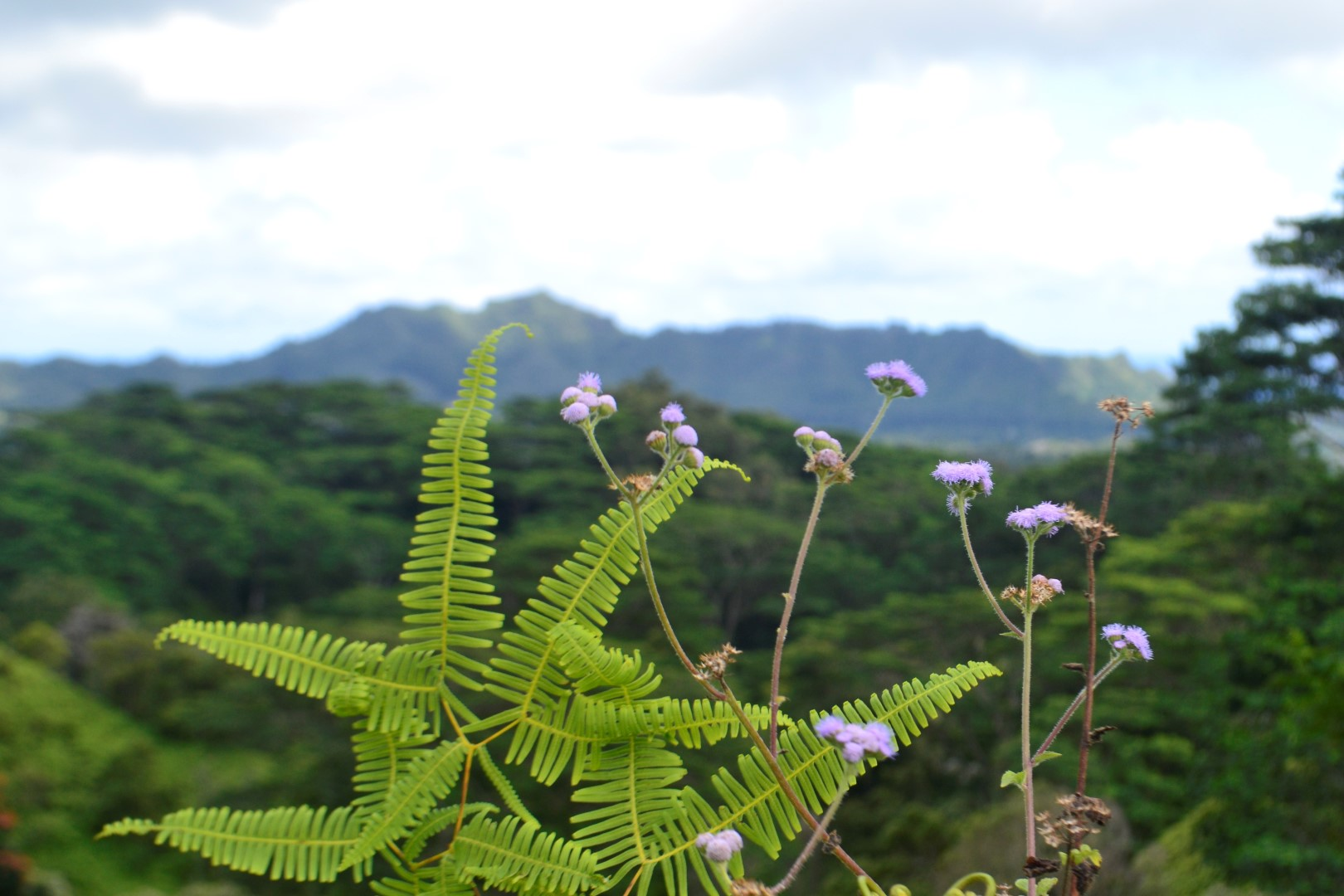 Ferns, flowers, rain forest (photo: Andy Bruner)