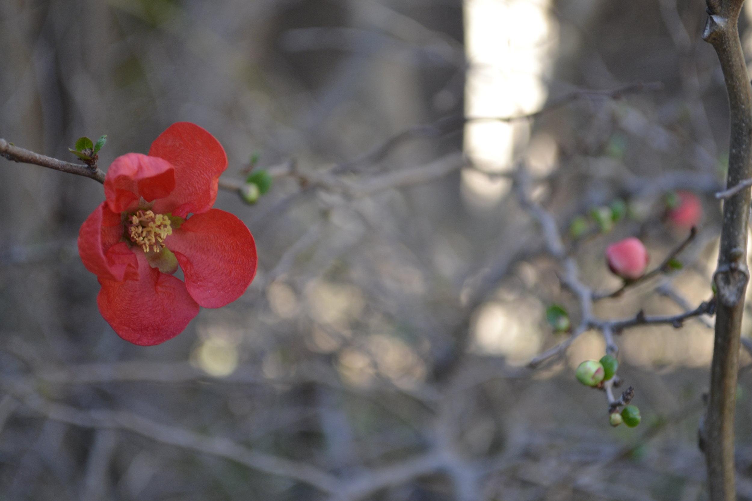 Ft Worth Botanical Garden (photo: Andy Bruner)