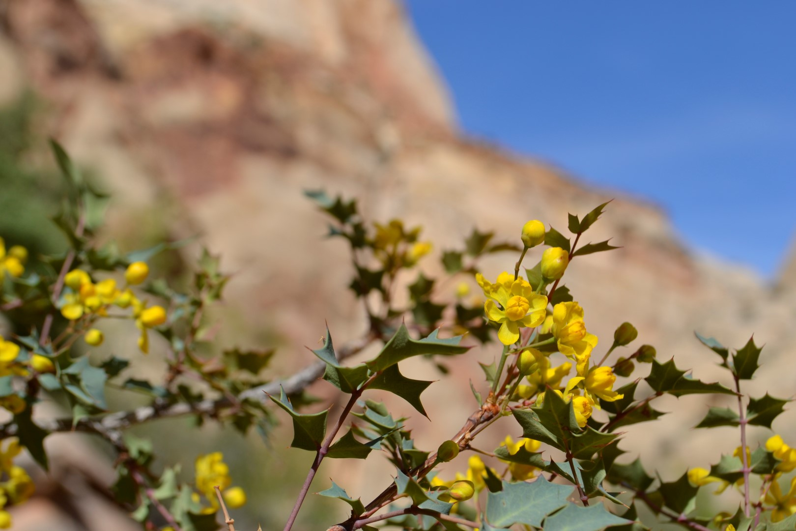 Utah wildflowers, photo: Andy Bruner
