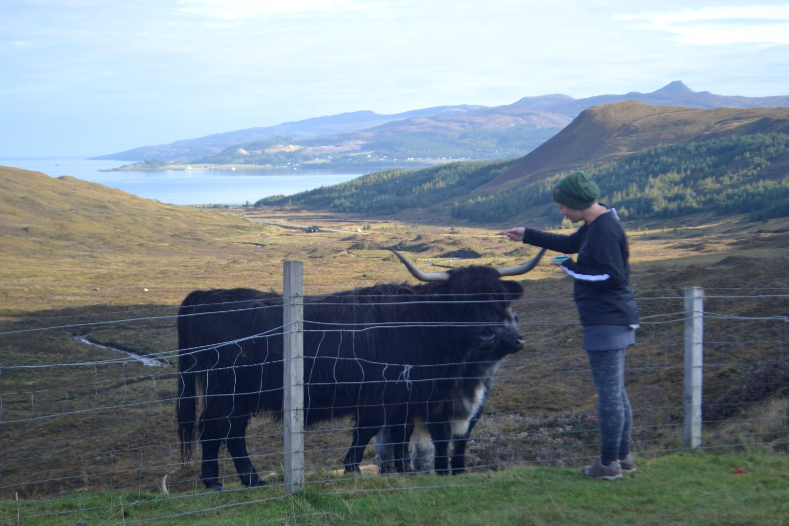 Me, about to get gently whacked by this cow's horns... photo, Andy Bruner