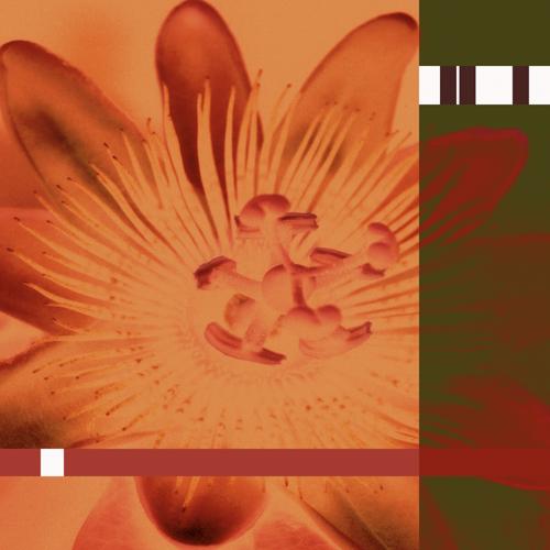 N29 Orange.jpg
