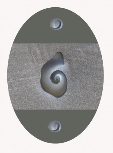ovalshell.jpg