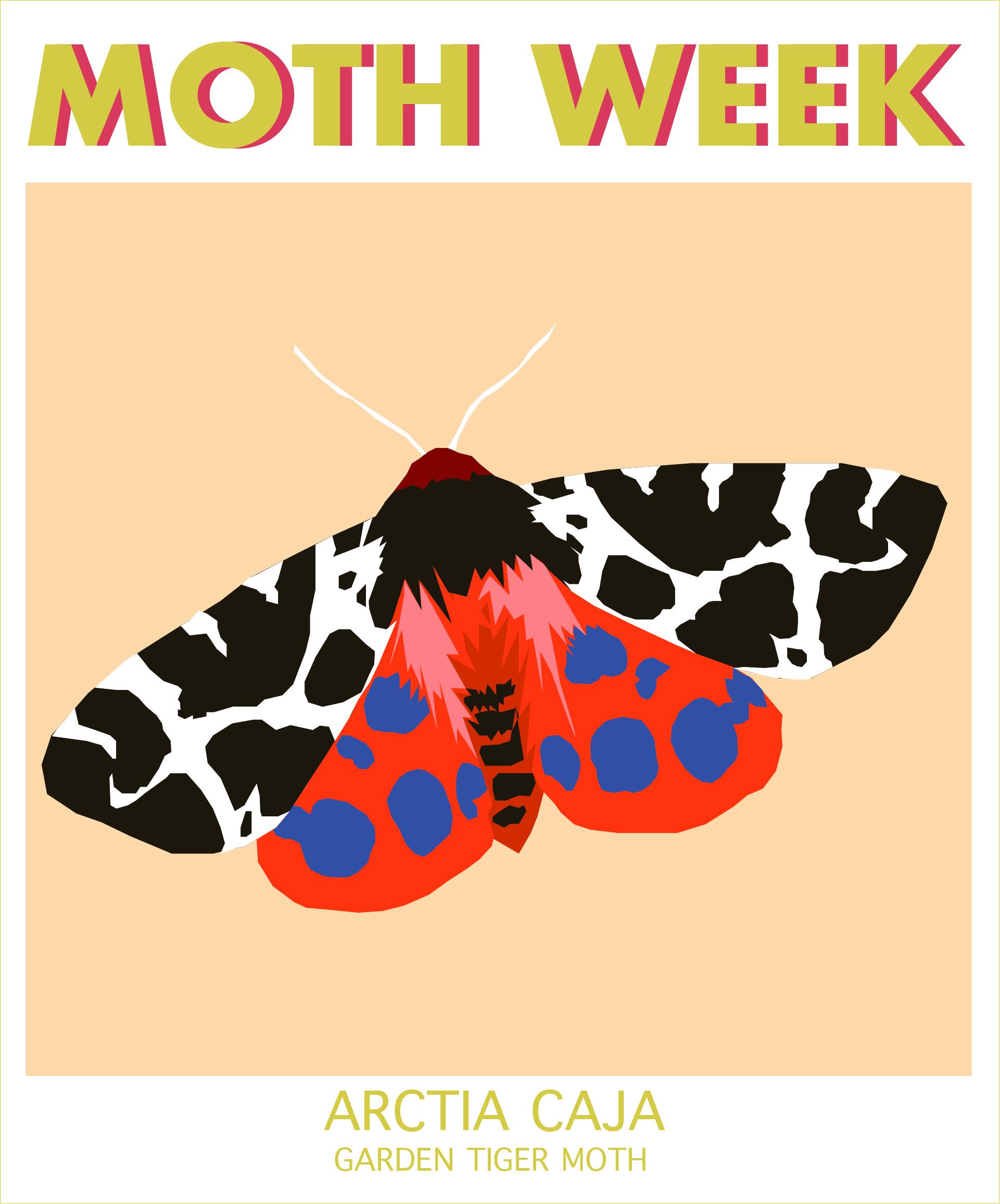 moth week garden tiger.jpg
