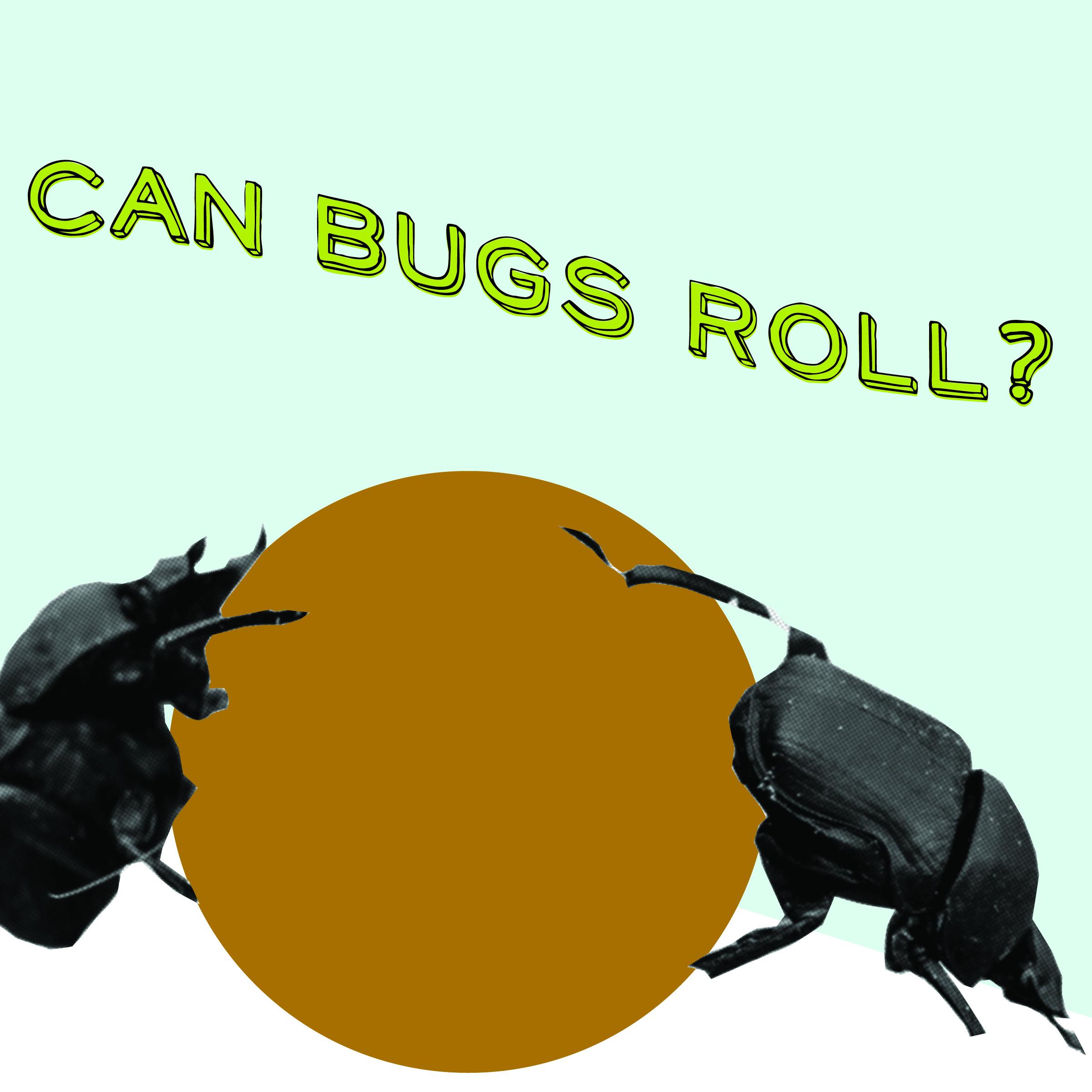 bug can roll-01.jpg