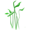 plant9.png