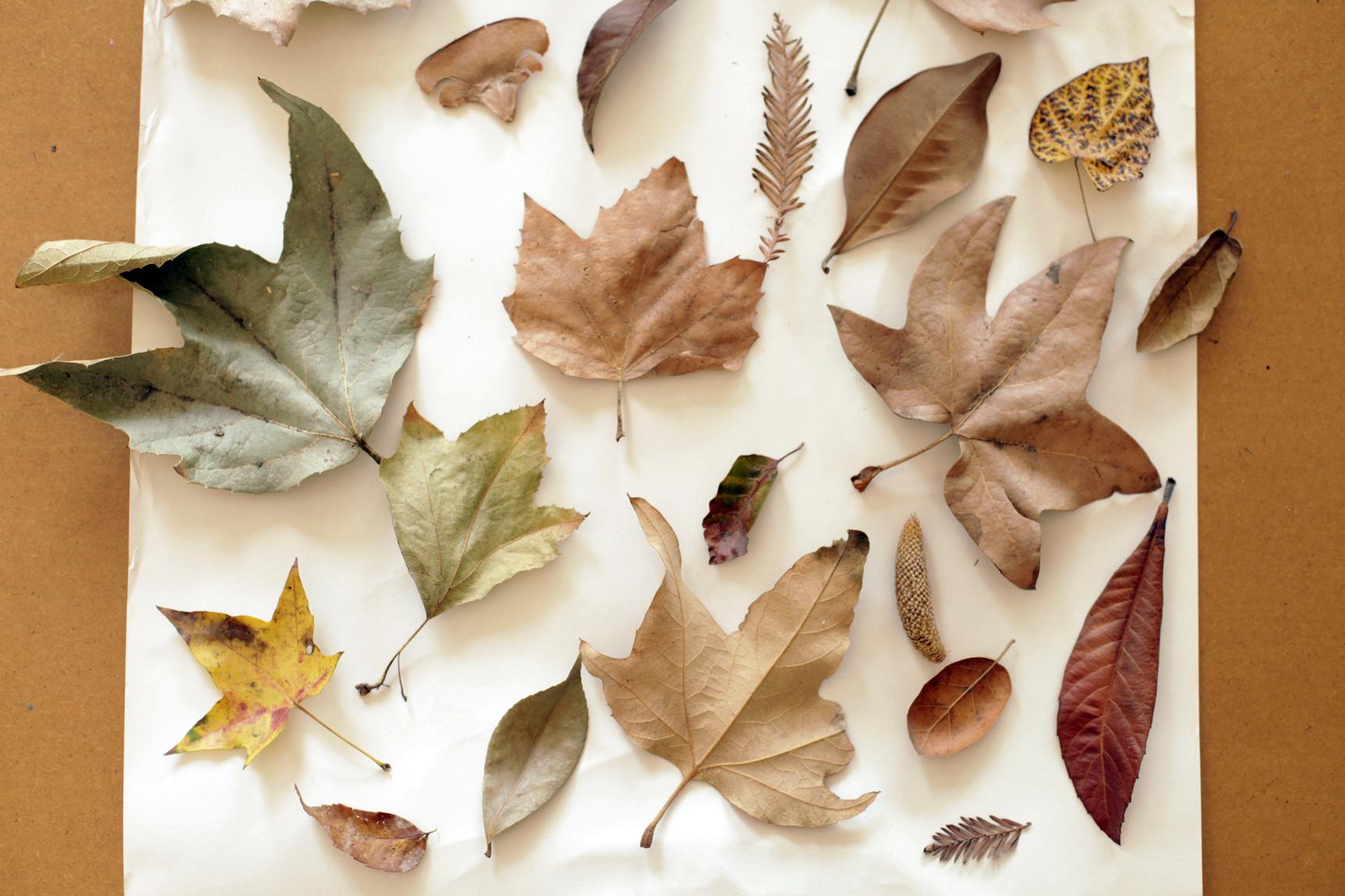 leavesfall.jpg