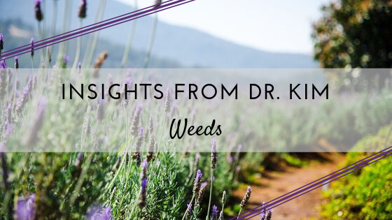 Insights from Dr. Kim_ Weeds.png
