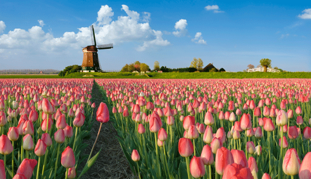 IMAGE FROM http://www.swisseuropetravel.com.au/netherlands-holiday