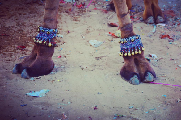 CAMEL FAIR, PUSHKAR, INDIA // IMAGE BY EMILY S. FOR USE MEETYOUTHERE.ME