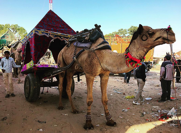 PAY ATTENTION TO THE GARBAGE AT THIS CAMELS FEET // meet you there blog images