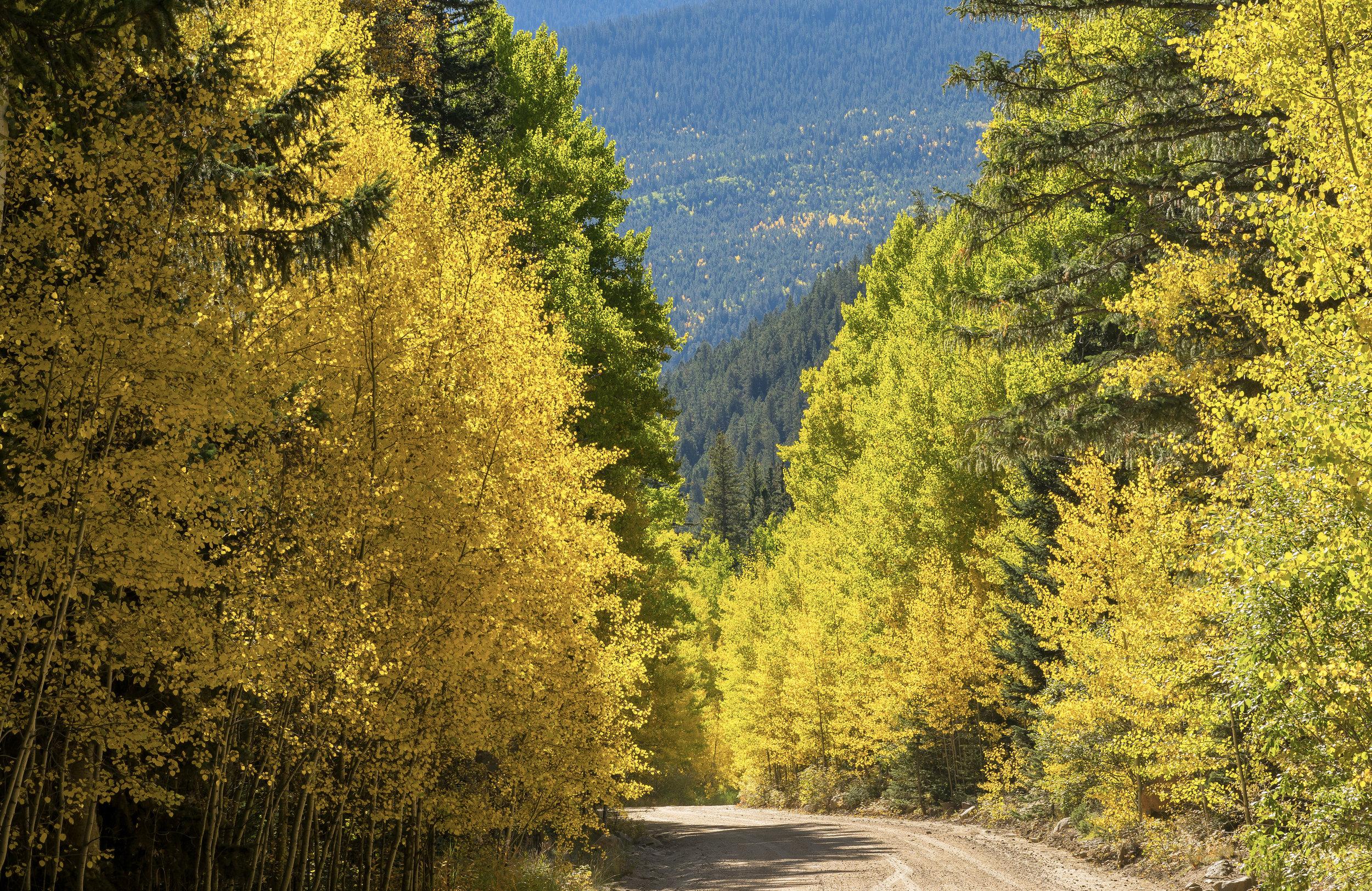 Guenella Pass Area, Colorado - image by FRANKIEBOYPHOTOGRAPHY.COM