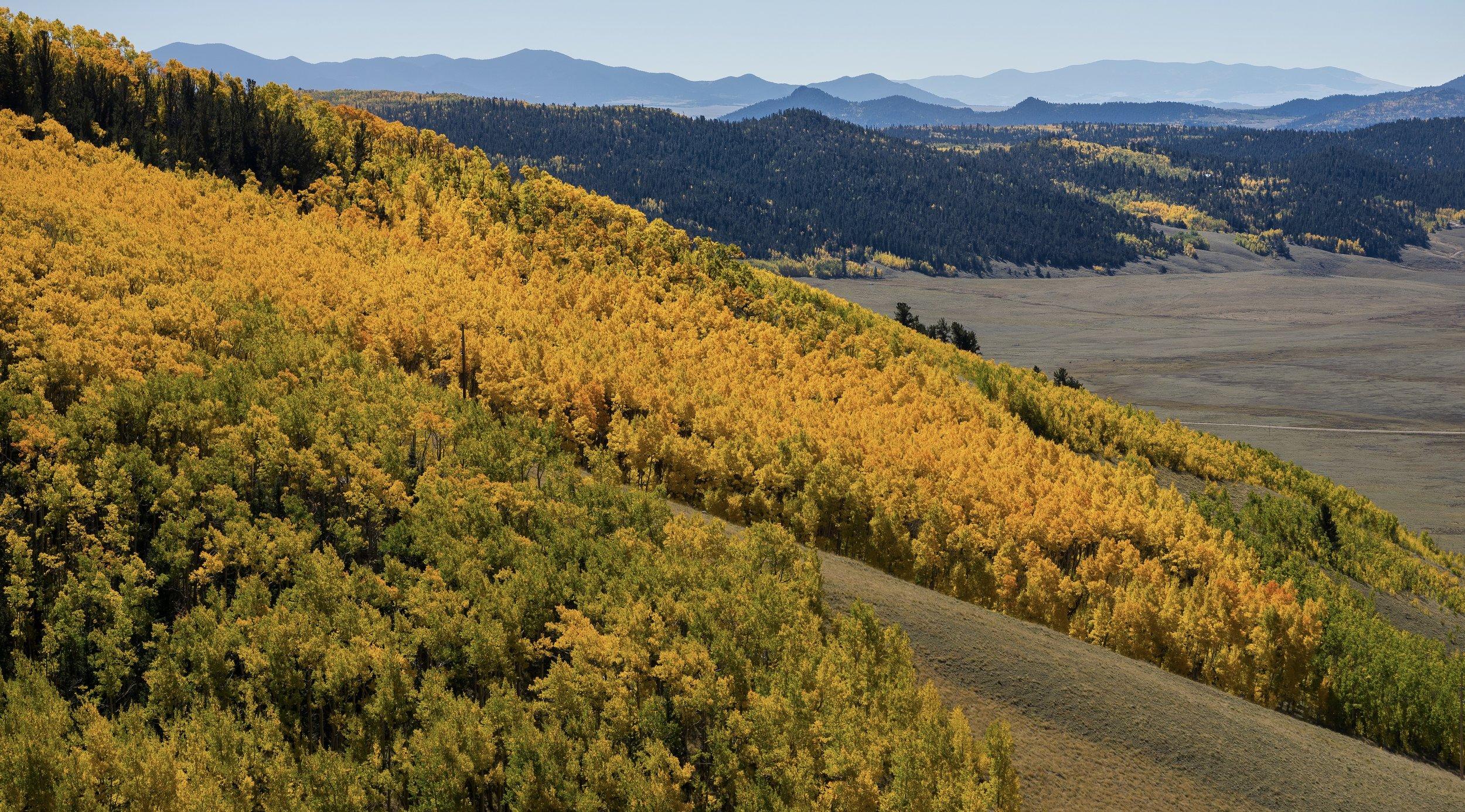 Colorado Trail up on Kenosha pass, colorado
