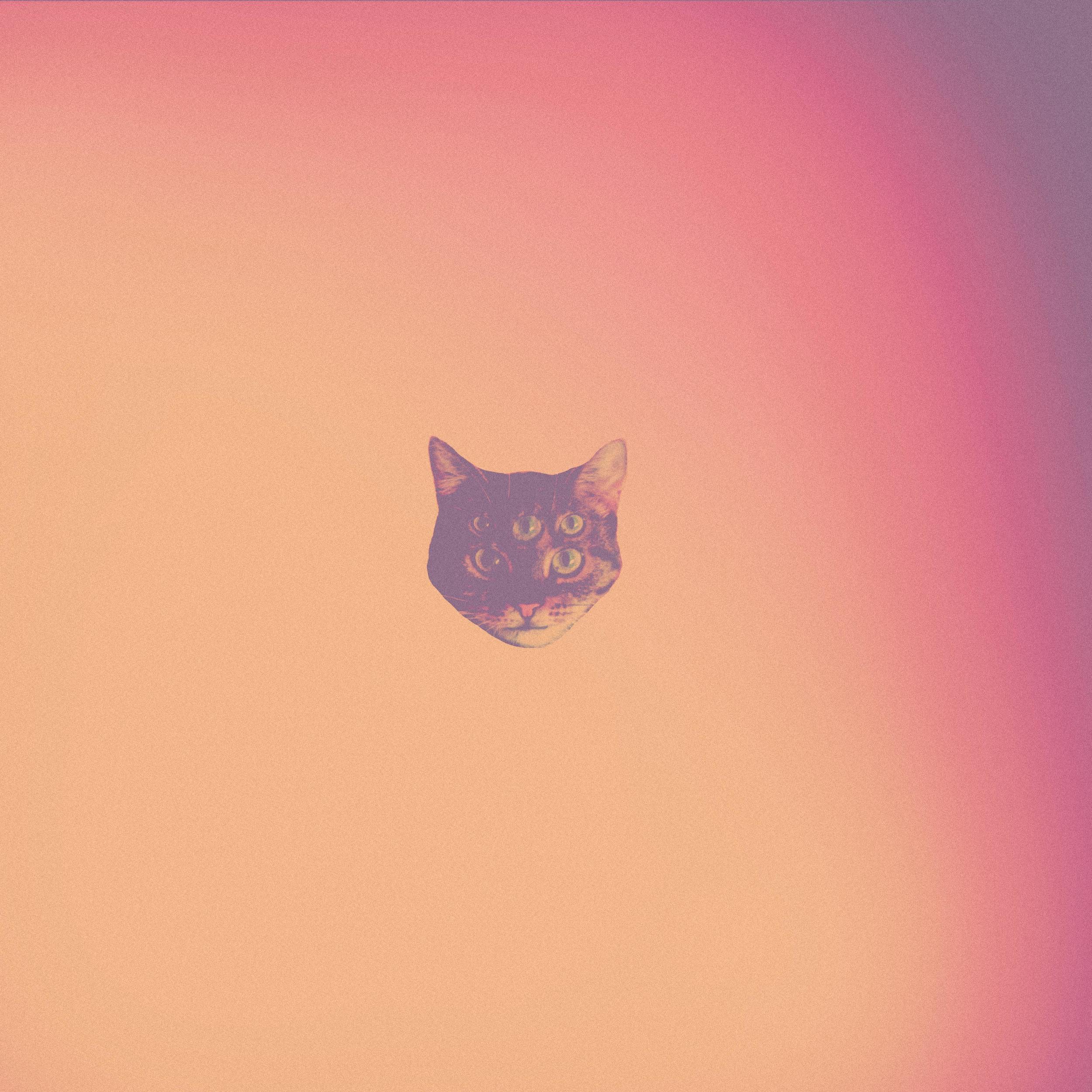 Gradient cat.jpg