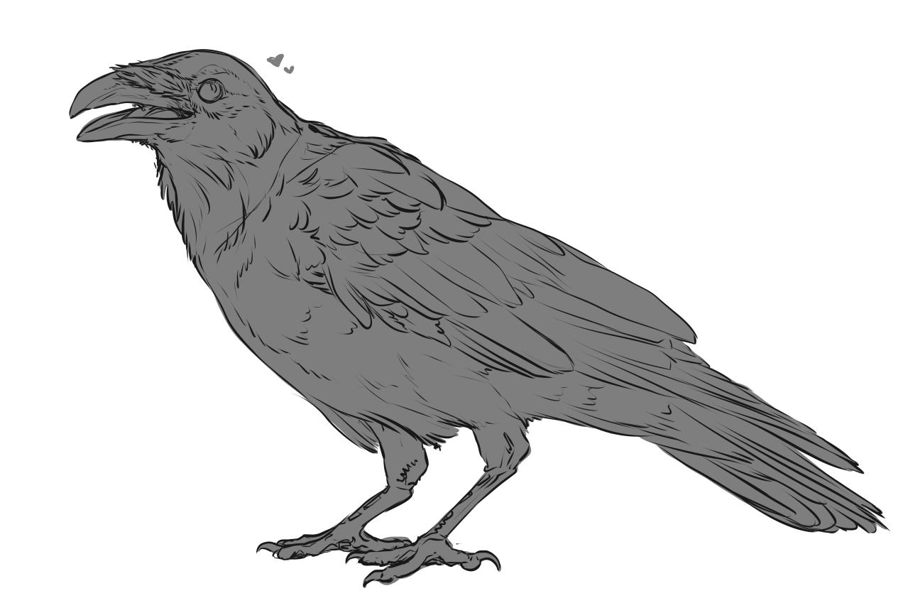 Crow Sketch