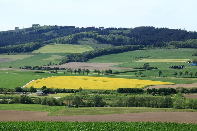 Foto: Frank Vincentz /Wikimedia