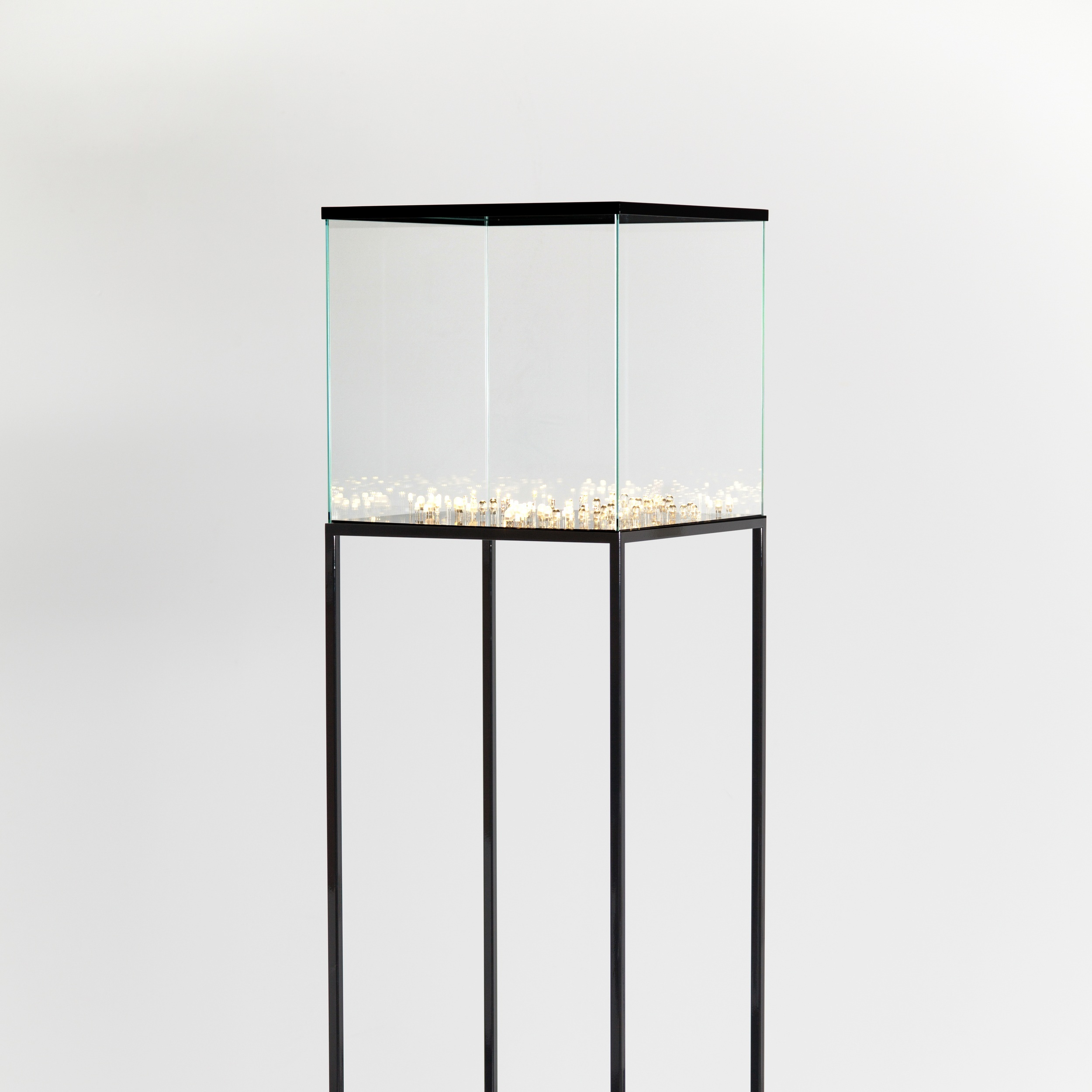 Light Culture, 2013