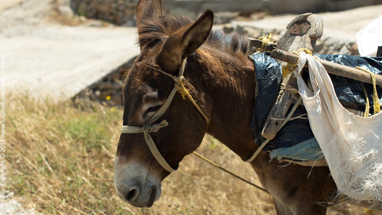 folegandros donkey