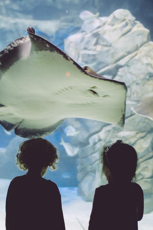 Ripley's Aquarium (2 of 1).jpg