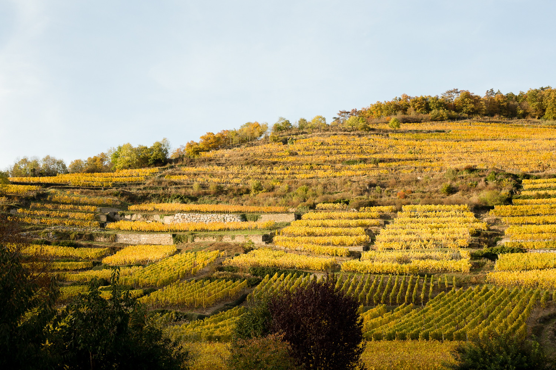 weekend-in-alsace-Kaysersberg-best-place-to-visit-france-14.jpg