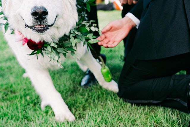 @yeti_the_great was so excited to get down the aisle to his parents that he ran into my frame faster than I could zoom out. I love that this photo was still able to capture the energy of the moment with him pulling forward. Fur babies are a big part of people's lives and we never discourage anyone from having them involved in their weddings!