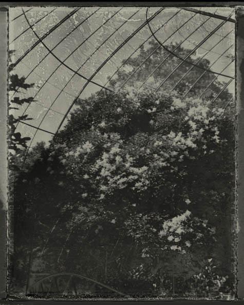 l'arbre en cage , sarah moon, 2013
