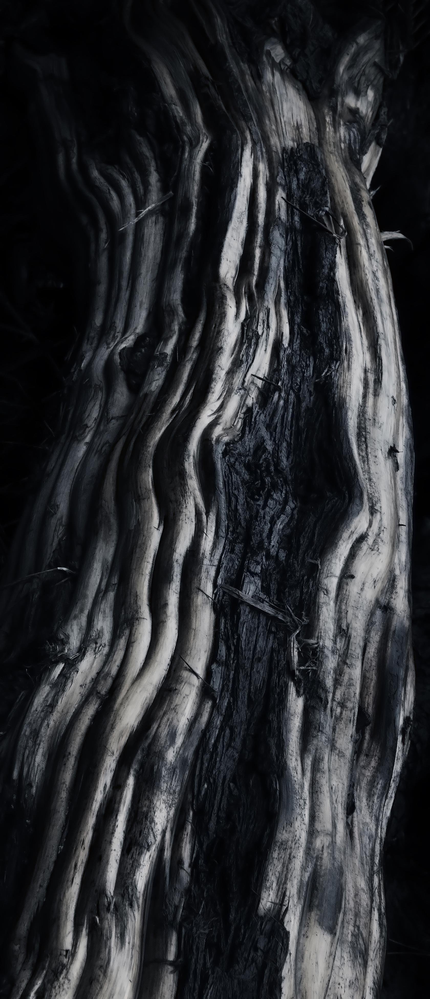fallen giants photography by jona sees | S/TUDIO